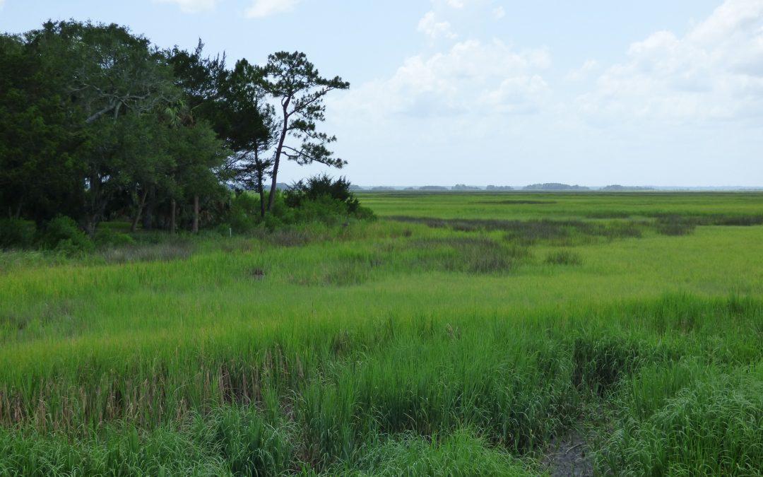 Marshes of Glynn